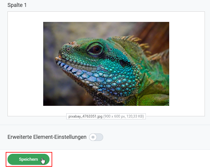 kostenlose-bilder-galerie-fuer-den-rapdmail-newsletter-